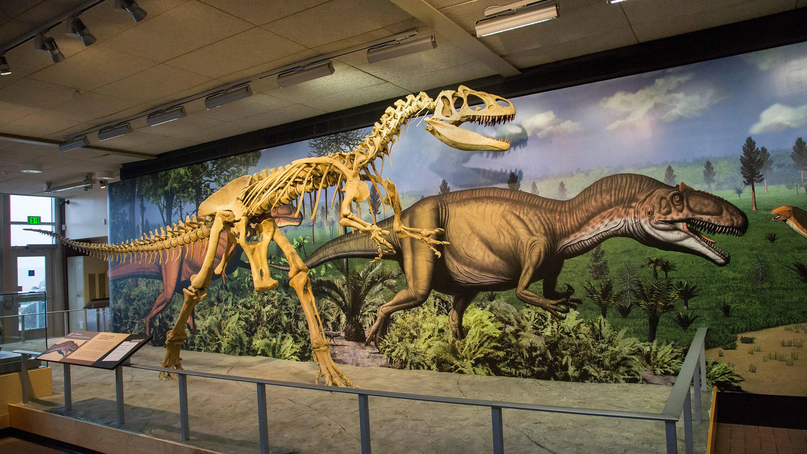Radio carbon dating can be used to find the age of dinosaur fossils