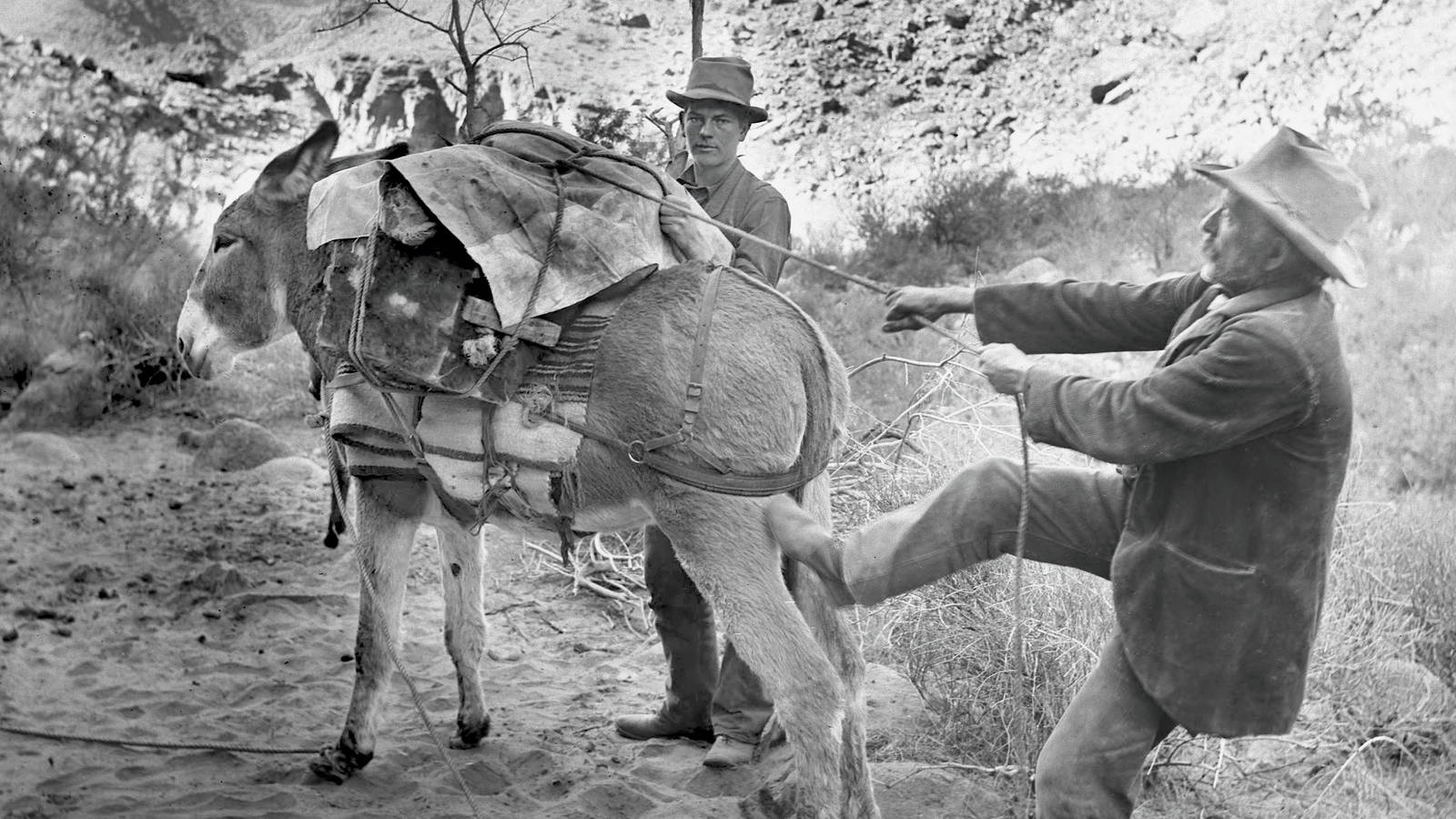 The Burro Quandary · National Parks Conservation Association
