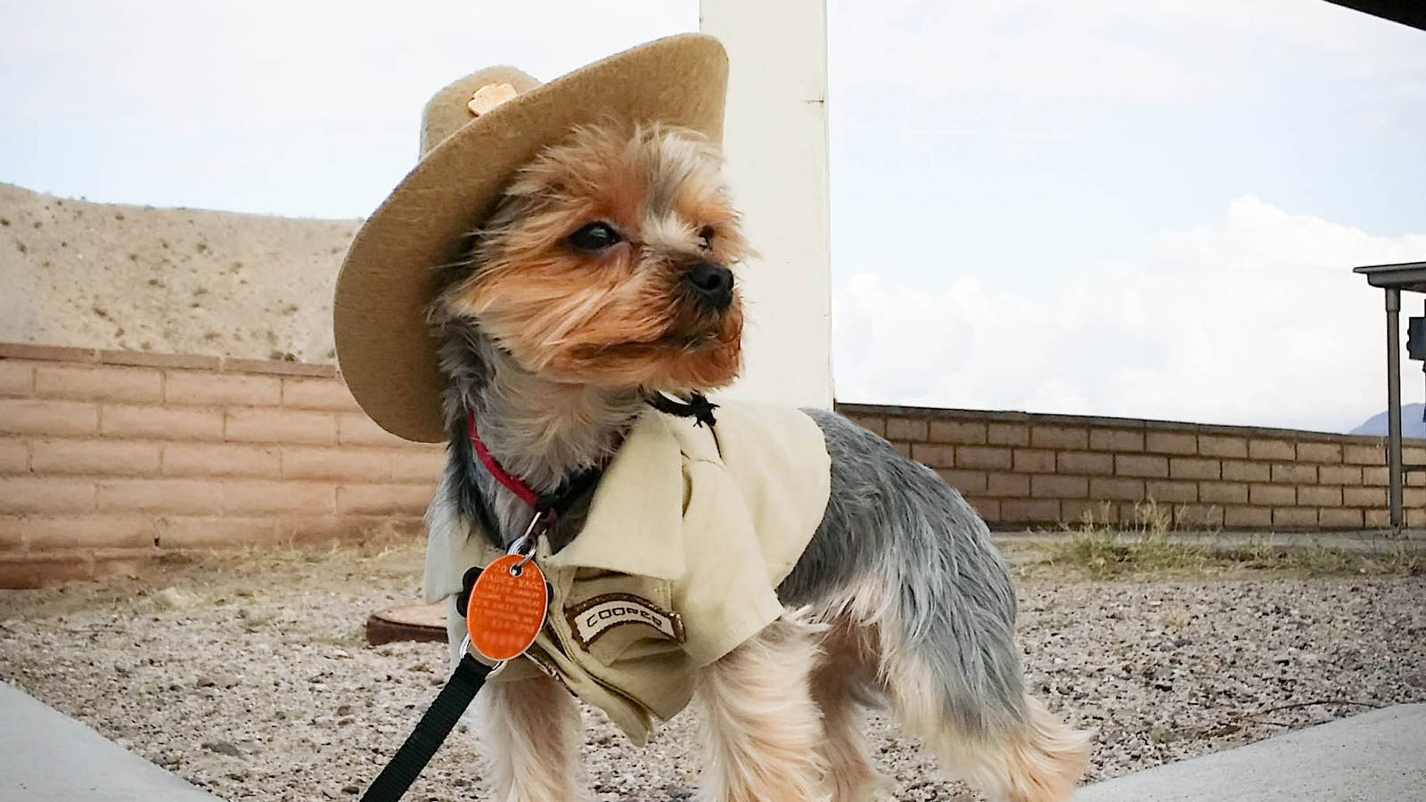 Working Like A Dog See How Pups Help Park Rangers In These 12 Unusual Jobs National Parks Conservation Association