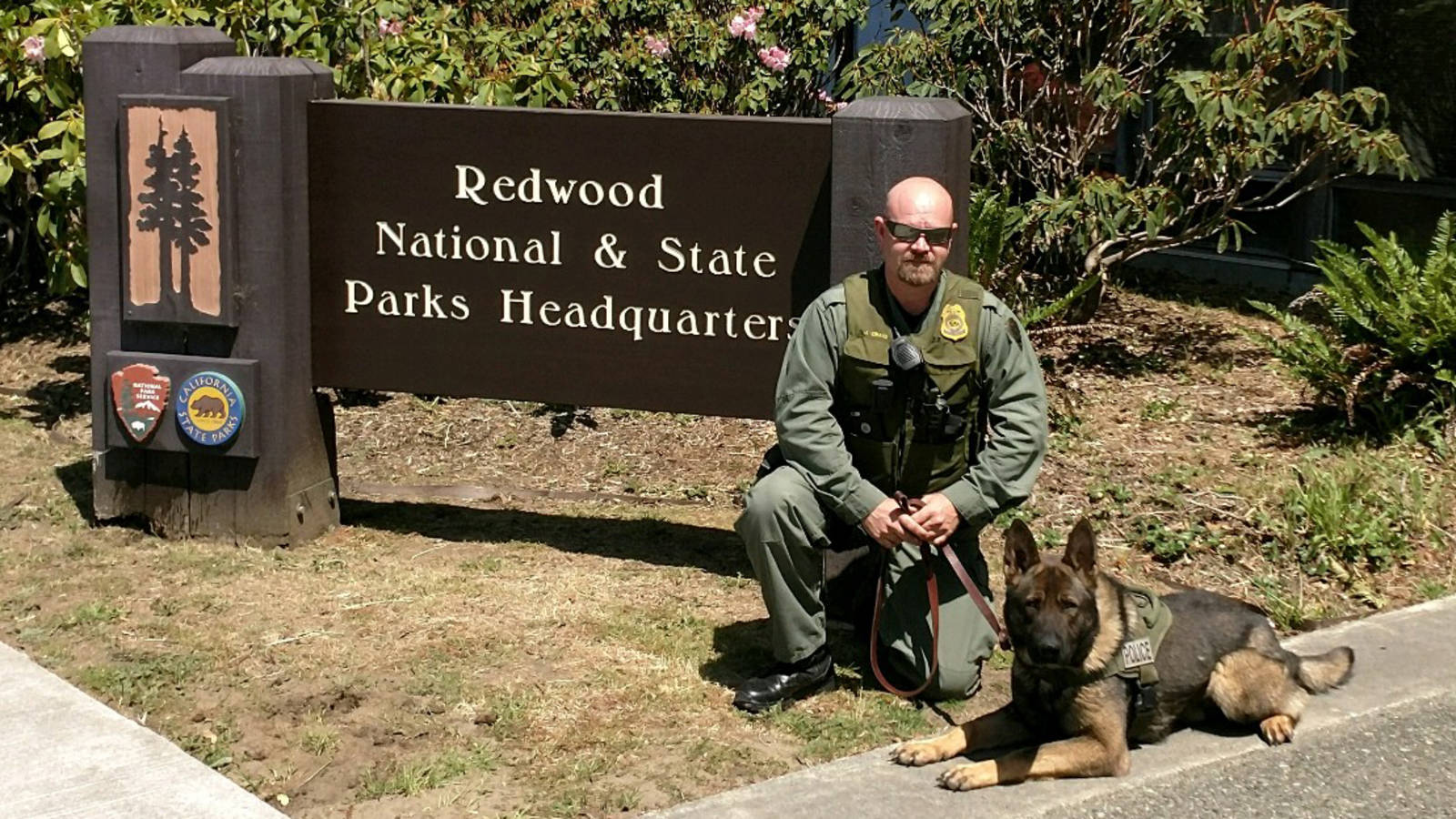 Working Like a Dog: See How Pups Help Park Rangers in These