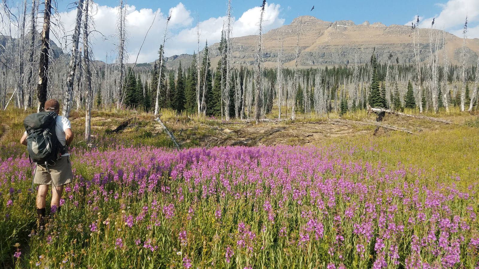 What We Stand to Lose at Glacier National Park · National Parks
