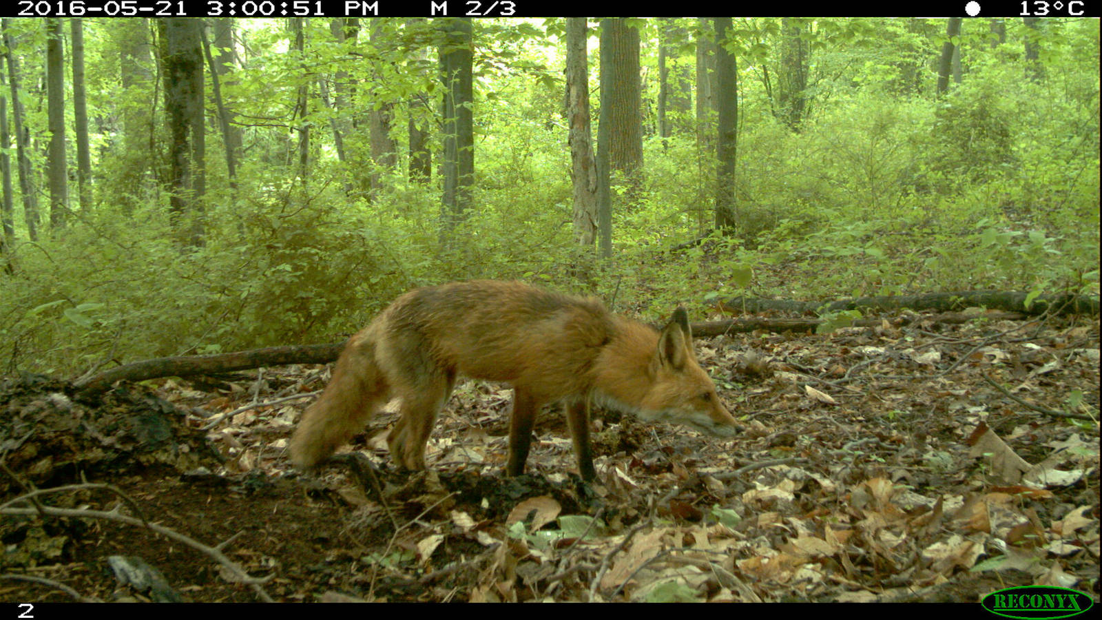 The Art and Science of Camera Trapping · National Parks