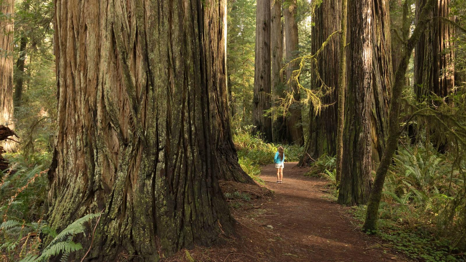 10 (Truly) Hidden National Park Gems · National Parks Conservation ...