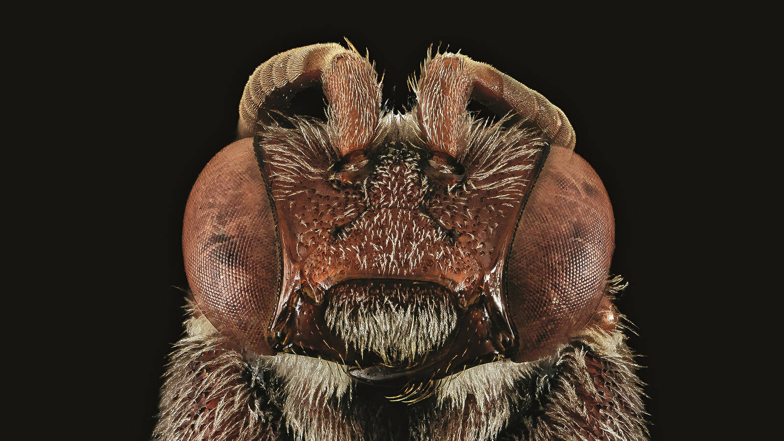 """<h3 style=""""text-align: center; padding: 50px;""""><span class=""""text-Intro-style""""><em>Nomada australis</em> (bee), Gateway National Recreation Area, New York. © BROOKE ALEXANDER/USGS BEE INVENTORY AND MONITORING LAB</span></h3>"""