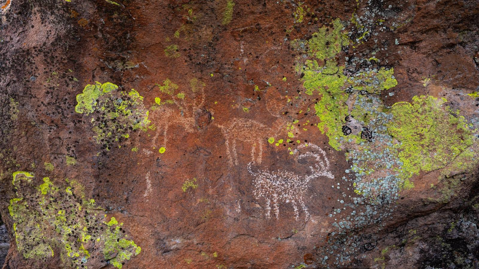 """<h3 style=""""text-align: center; padding: 50px;""""><span class=""""text-Intro-style"""">Bighorn sheep figures at Basin and Range National Monument. © STEPHEN ALVAREZ</span></h3>"""