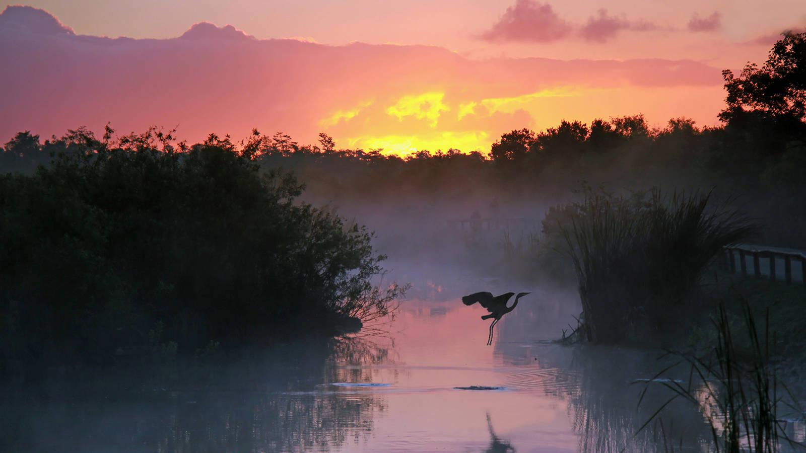 Image result for everglades national park