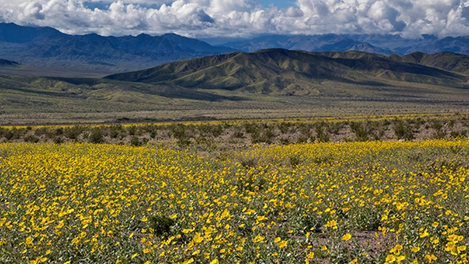 Dreaming of spring 9 great spots to see wildflowers national 2 death valley national park california mightylinksfo