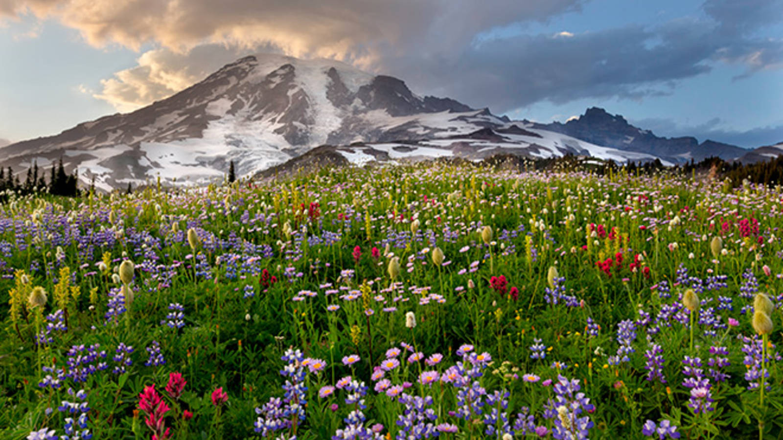 dreaming of spring  9 great spots to see wildflowers
