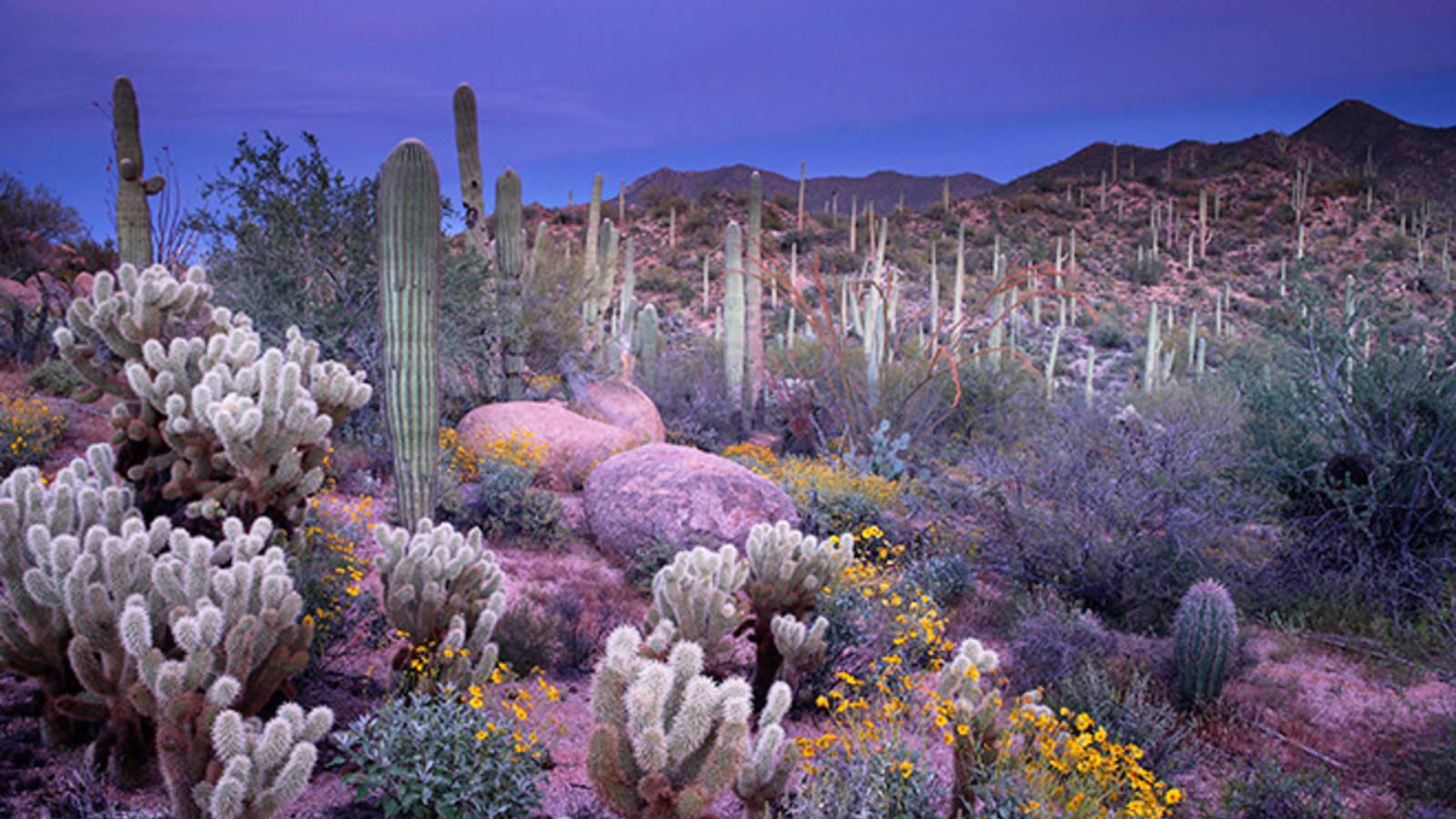 Sonoran Desert Mystique 183 National Parks Conservation