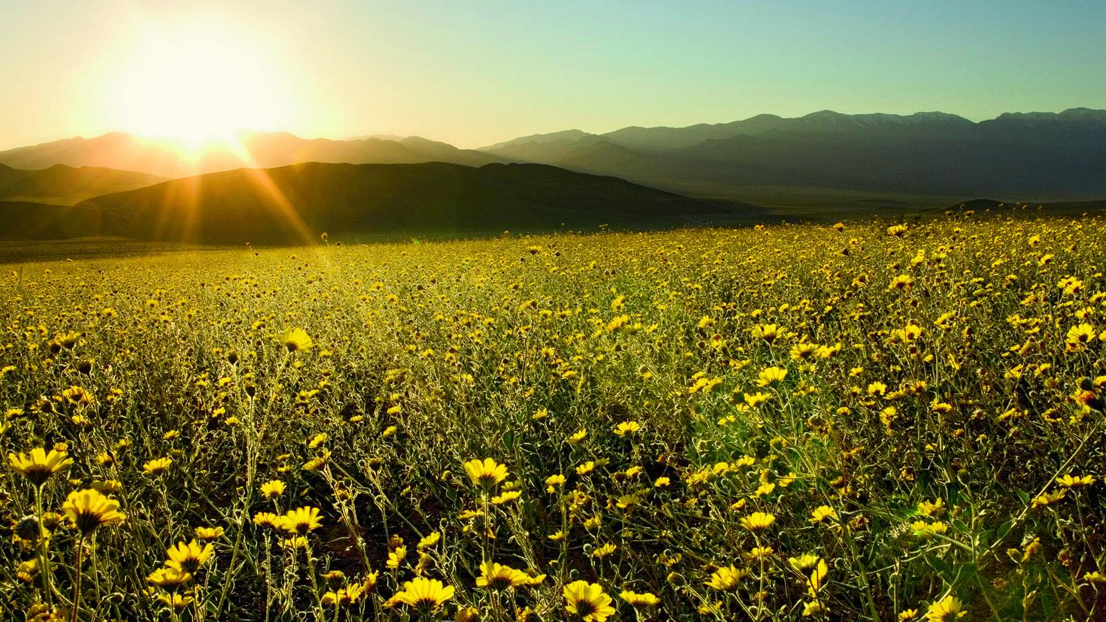 Striking Desert Gold National Parks Conservation Association