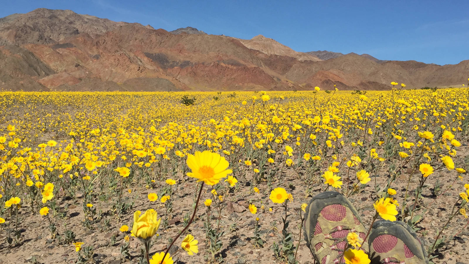 Valley Of Life How The Super Bloom Is Transforming Death Valley