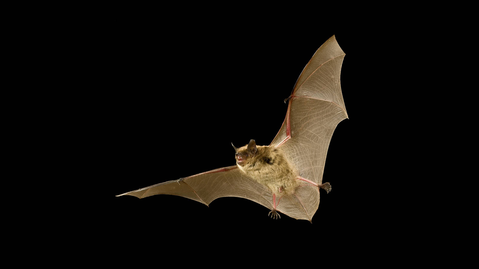the trouble with bats national parks conservation association