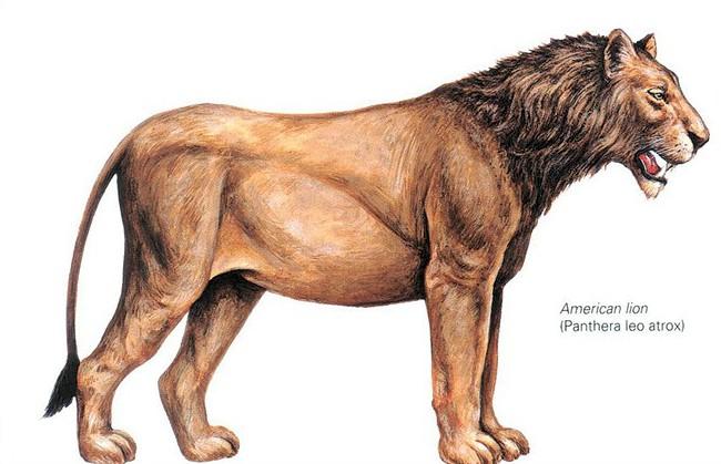 The American Lion of Tule Springs, Nevada, near Las Vegas