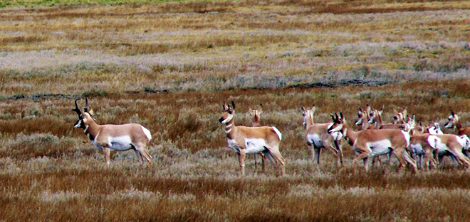 Pronghorn and other wildlife abound in the South Park National Heritage Area, which is only an hour and a half's drive from the busy Front Range cities of Denver and Colorado Springs.