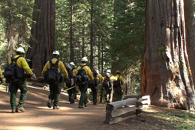 A National Park Service fire crew enters the Tuolumne Grove in Yosemite National Park to help protect giant sequoia from the 2013 Rim fire which ultimately consumed more than 250,000 acres, including nearly 80,000 acres of park land. Dedicated wildfire funding would allow NPS staff to handle emergencies without devoting large portions of their budgets to costly response efforts.