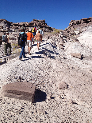 Volunteers scout and mark an old prospector road that will become a new wilderness trail at Petrified Forest as part of last year's National Public Lands Day.